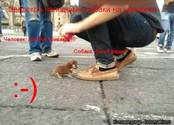 Котоматрица: Зверское наподение собаки на человека Человек: ААААА убивают!!!! Собака: Ты чё ваще? :-)