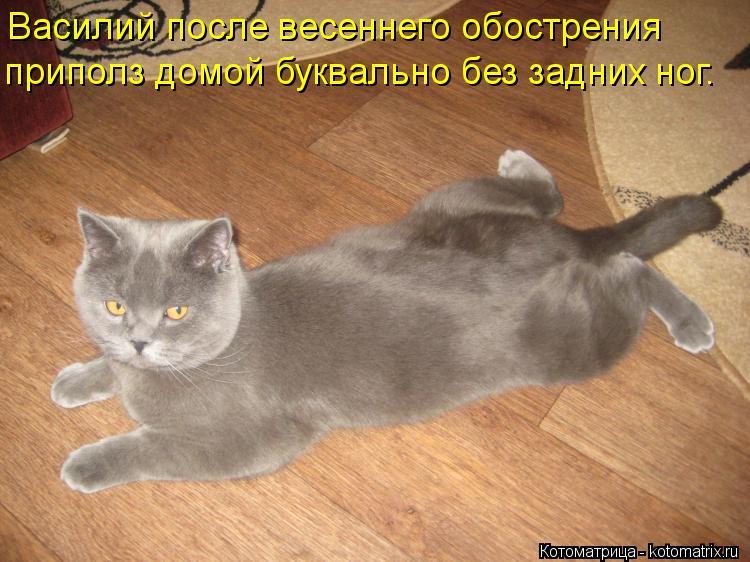 Котоматрица: Василий после весеннего обострения приполз домой буквально без задних ног.