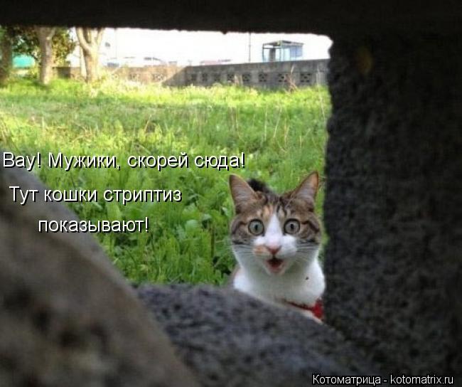 Котоматрица: Вау! Мужики, скорей сюда! Тут кошки стриптиз показывают!