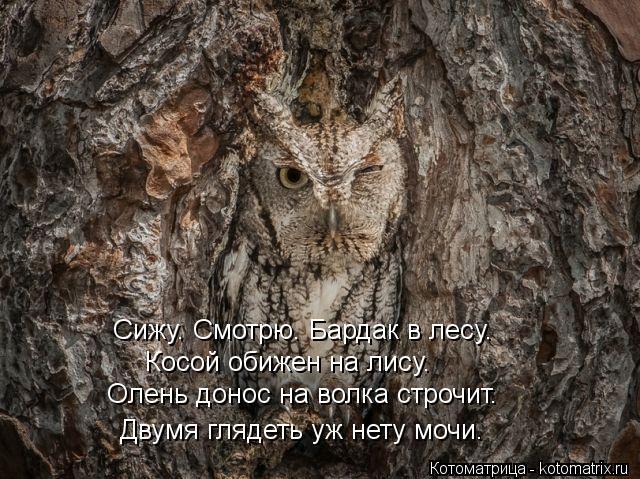 Котоматрица: Сижу. Смотрю. Бардак в лесу. Косой обижен на лису. Олень донос на волка строчит. Двумя глядеть уж нету мочи.
