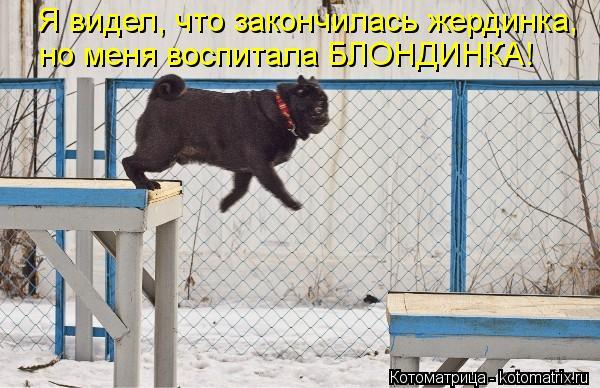 Котоматрица: Я видел, что закончилась жердинка, но меня воспитала БЛОНДИНКА!