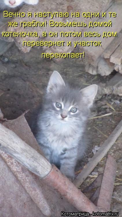 Котоматрица: Вечно я наступаю на одни и те же грабли! Возьмешь домой котеночка, а он потом весь дом перевернет и участок  перекопает!