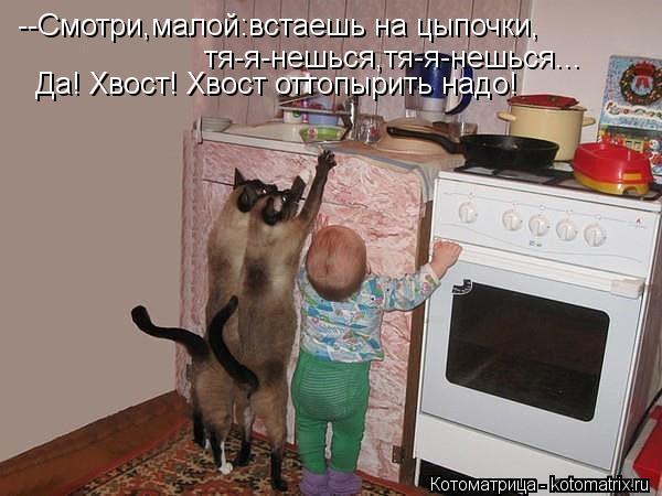 Котоматрица: --Смотри,малой:встаешь на цыпочки, тя-я-нешься,тя-я-нешься... Да! Хвост! Хвост оттопырить надо!