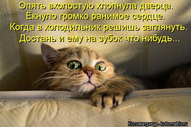Котоматрица: Опять вхолостую хлопнула дверца. Ёкнуло громко ранимое сердце. Когда в холодильник решишь заглянуть. Достань и ему на зубок что нибудь...
