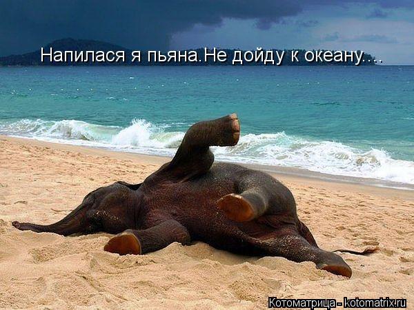 Котоматрица: Напилася я пьяна.Не дойду к океану....