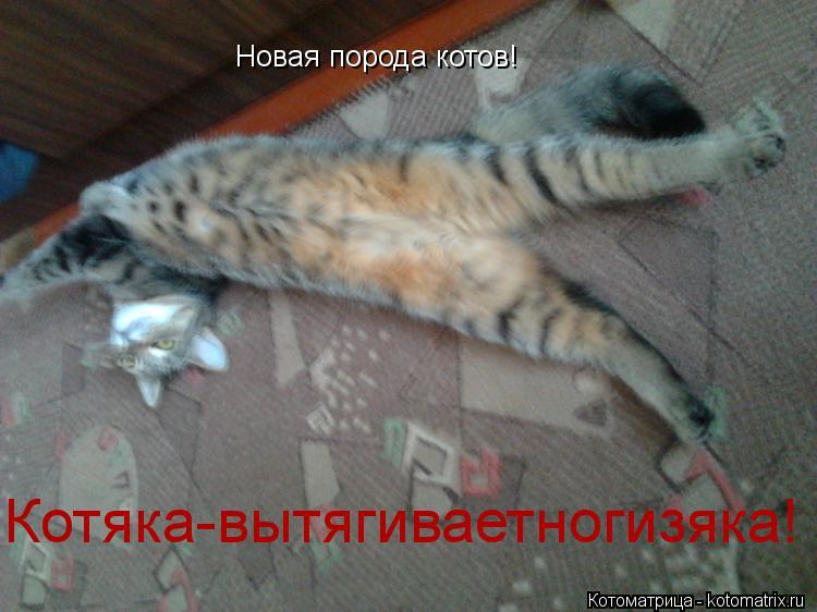 Котоматрица: Новая порода котов! Котяка-вытягиваетногизяка!
