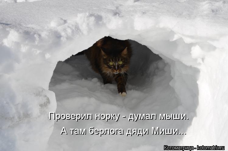 Котоматрица: Проверил норку - думал мыши. А там берлога дяди Миши...
