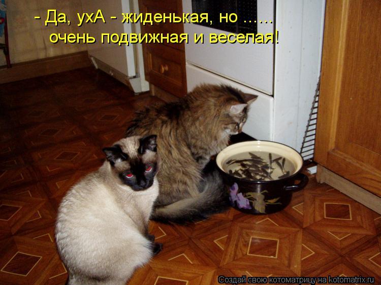 Котоматрица: - Да, ухА - жиденькая, но ...... очень подвижная и веселая!