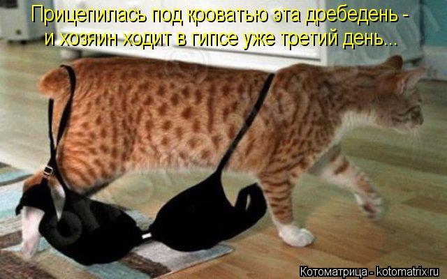 Котоматрица: Прицепилась под кроватью эта дребедень - и хозяин ходит в гипсе уже третий день...