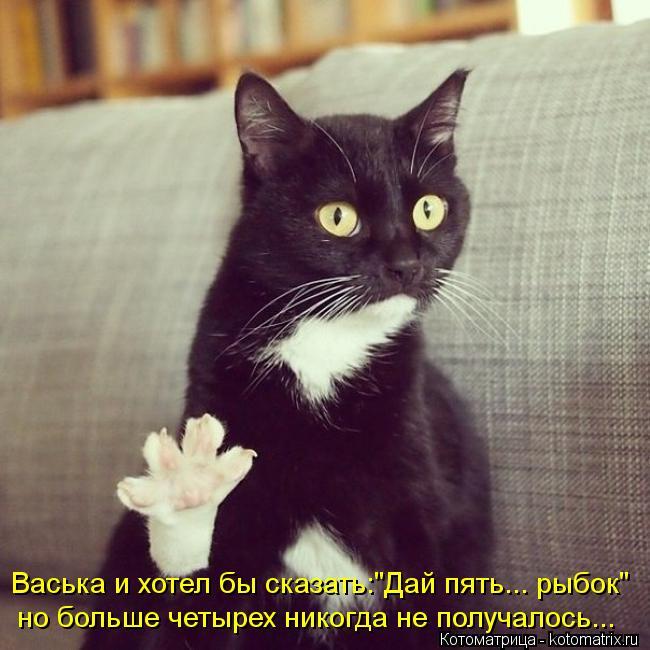 """Котоматрица: Васька и хотел бы сказать:""""Дай пять... рыбок"""" но больше четырех никогда не получалось..."""