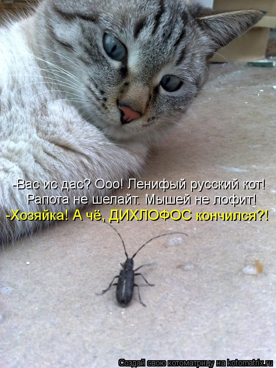 Котоматрица: -Вас ис дас? Ооо! Ленифый русский кот! Рапота не шелайт. Мышей не лофит! -Хозяйка! А чё, ДИХЛОФОС кончился?!