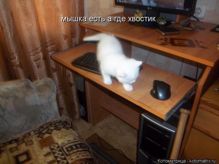 Котоматрица: мышка есть а где хвостик