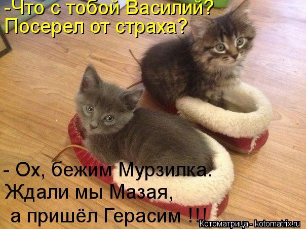 Котоматрица: -Что с тобой Василий?  Посерел от страха? - Ох, бежим Мурзилка.  Ждали мы Мазая, а пришёл Герасим !!!