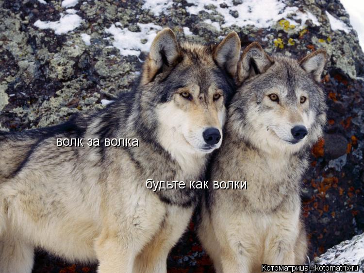 Котоматрица: волк за волка будьте как волки