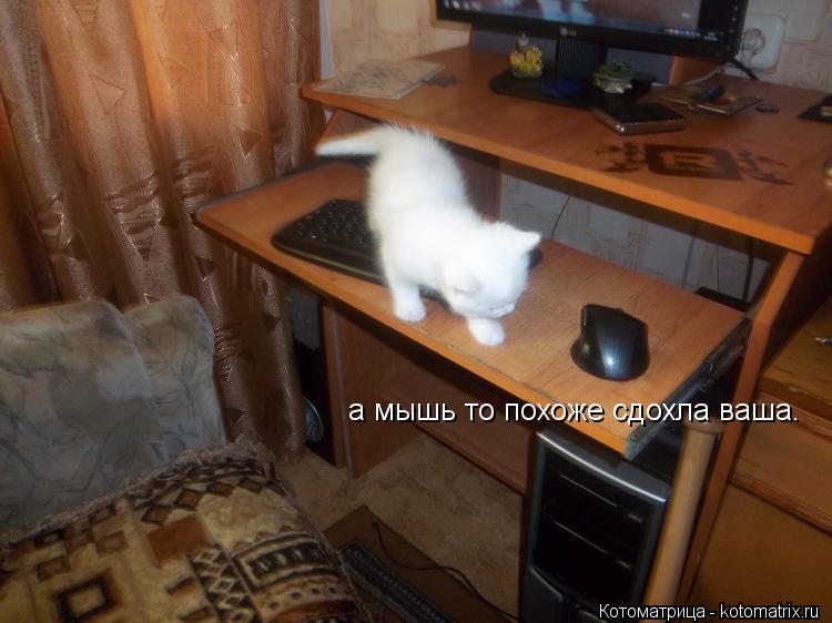 Котоматрица: а мышь то похоже сдохла ваша.