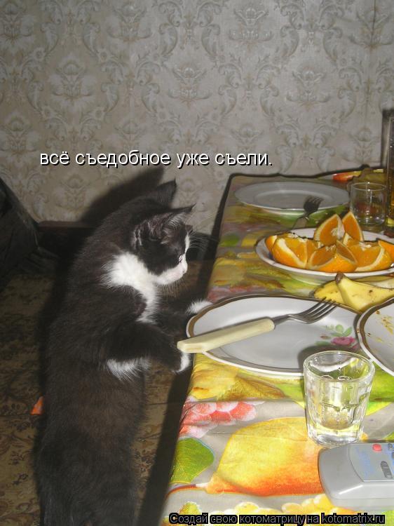 Котоматрица: всё съедобное уже съели.