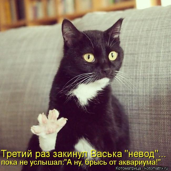 """Котоматрица: Третий раз закинул Васька """"невод""""... пока не услышал:""""А ну, брысь от аквариума!"""""""