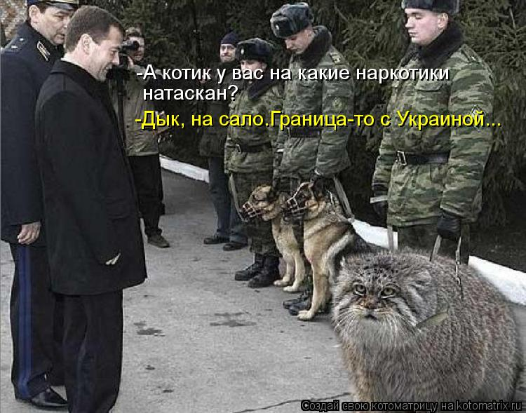 Котоматрица: -А котик у вас на какие наркотики натаскан? -Дык, на сало.Граница-то с Украиной...