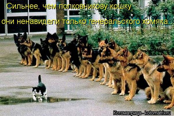 Котоматрица: Сильнее, чем полковникову кошку , они ненавидели только генеральского хомяка...