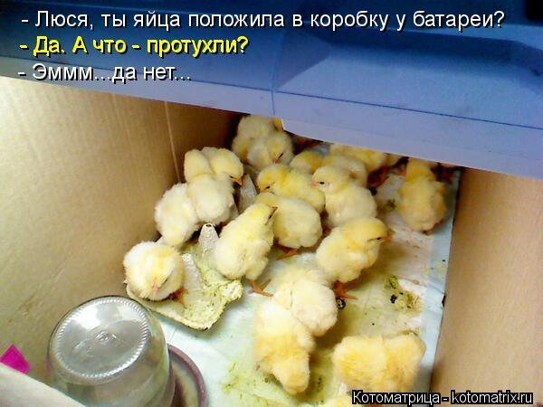 Котоматрица: - Люся, ты яйца положила в коробку у батареи? - Да. А что - протухли? - Да. А что - протухли? - Эммм...да нет...