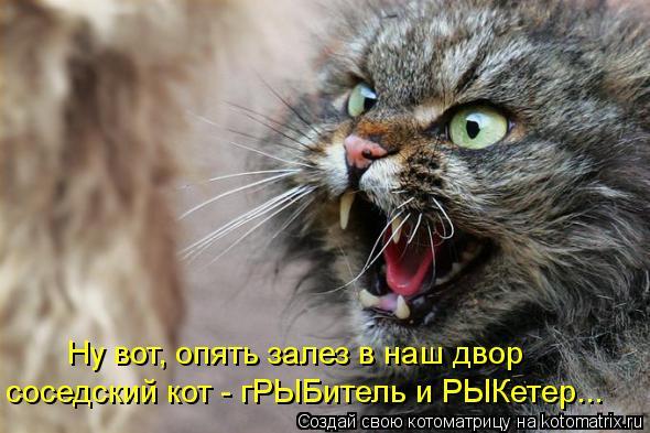Котоматрица: Ну вот, опять залез в наш двор соседский кот - гРЫБитель и РЫКетер...