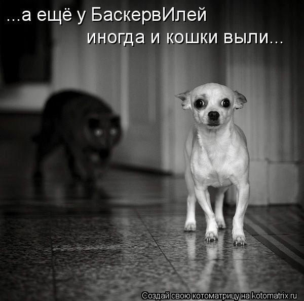 Котоматрица: ...а ещё у БаскервИлей  иногда и кошки выли...