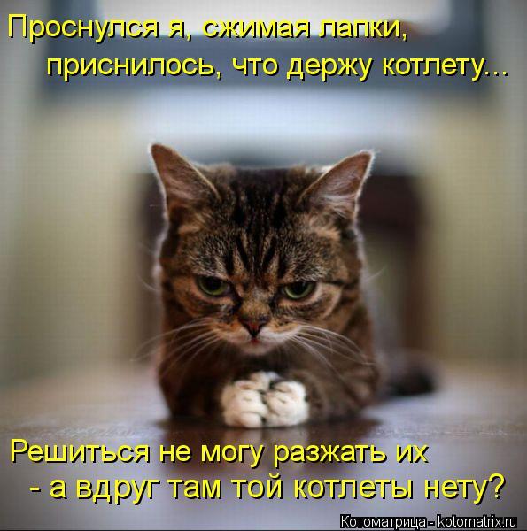 Котоматрица: Проснулся я, сжимая лапки,  приснилось, что держу котлету... Решиться не могу разжать их  - а вдруг там той котлеты нету?
