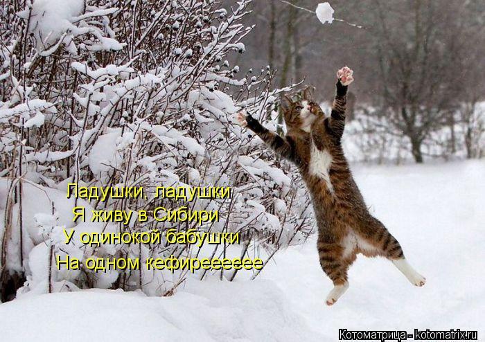 Котоматрица: Ладушки, ладушки Я живу в Сибири У одинокой бабушки На одном кефирееееее