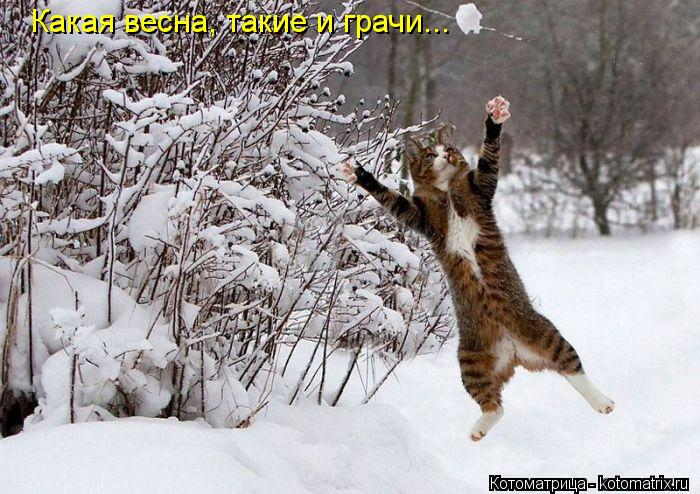 Котоматрица: Какая весна, такие и грачи...