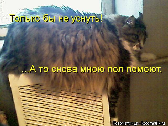 Котоматрица: Только бы не уснуть! ...А то снова мною пол помоют.