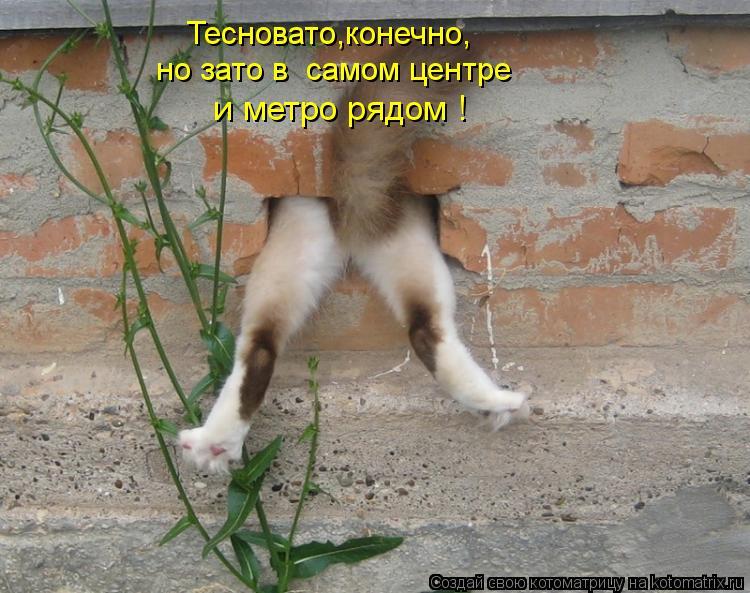 kotomatritsa_K-.jpg