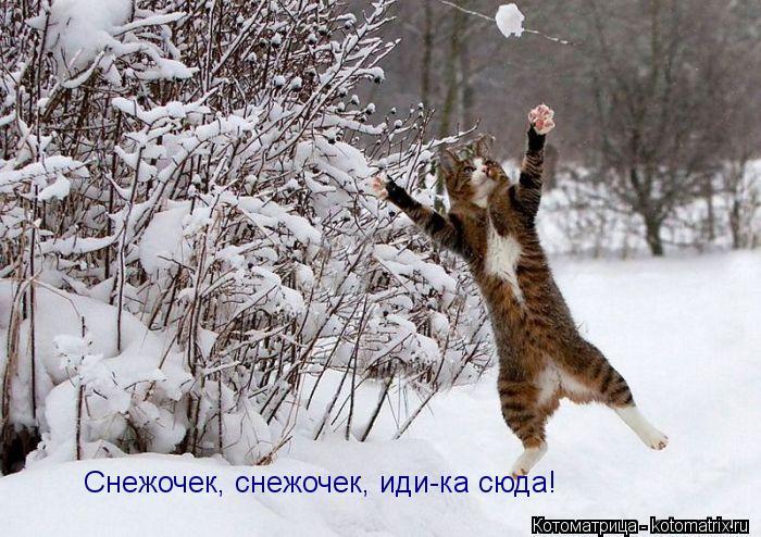 Котоматрица: Снежочек, снежочек, иди-ка сюда!