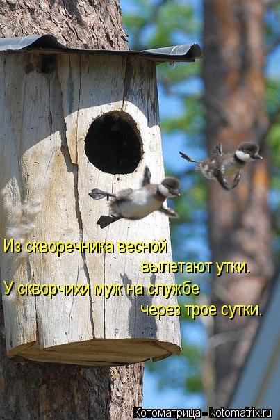 Котоматрица: Из скворечника весной  вылетают утки. У скворчихи муж на службе через трое сутки.