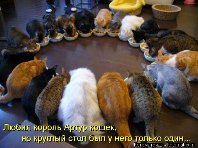 Котоматрица: Любил король Артур кошек, но круглый стол был у него только один...