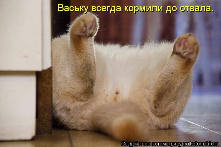Котоматрица: Ваську всегда кормили до отвала.