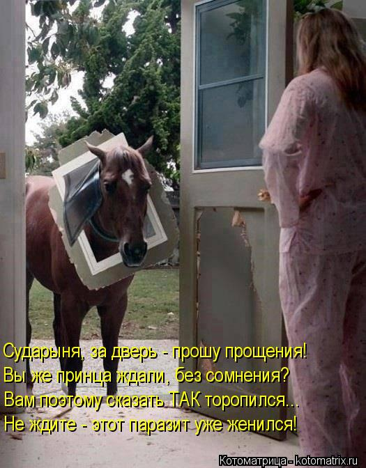 Котоматрица: Сударыня, за дверь - прошу прощения! Вы же принца ждали, без сомнения? Вам поэтому сказать ТАК торопился... Не ждите - этот паразит уже женился!