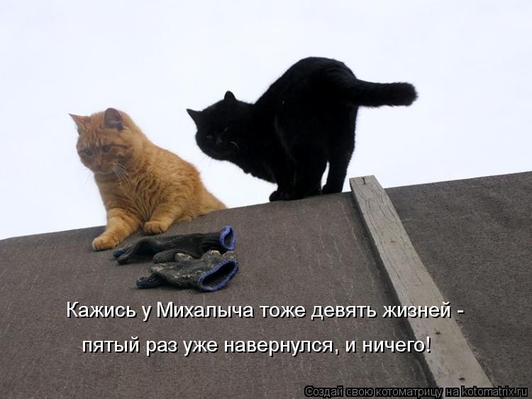 Котоматрица: Кажись у Михалыча тоже девять жизней -  пятый раз уже навернулся, и ничего!