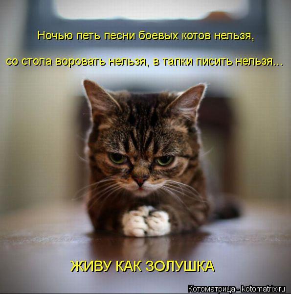 Котоматрица: Ночью петь песни боевых котов нельзя, со стола воровать нельзя, в тапки писить нельзя... ЖИВУ КАК ЗОЛУШКА