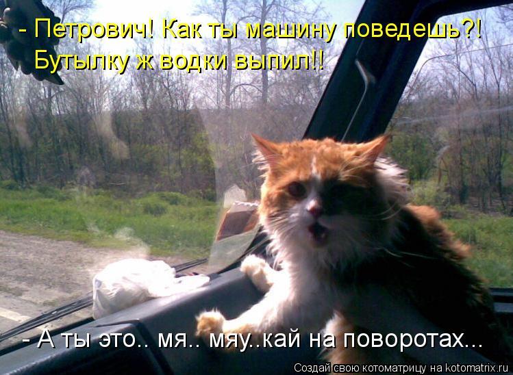 Котоматрица: - Петрович! Как ты машину поведешь?! Бутылку ж водки выпил!! - А ты это.. мя.. мяу..кай на поворотах...