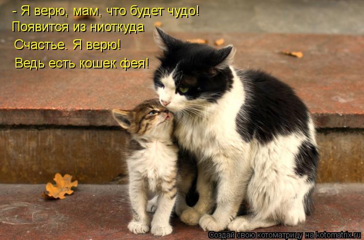 Котоматрица: - Я верю, мам, что будет чудо! Появится из ниоткуда Счастье. Я верю! Ведь есть кошек фея!