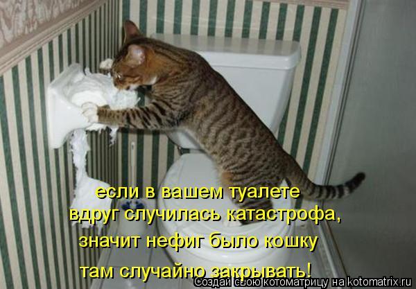 Котоматрица: если в вашем туалете вдруг случилась катастрофа, значит нефиг было кошку там случайно закрывать!