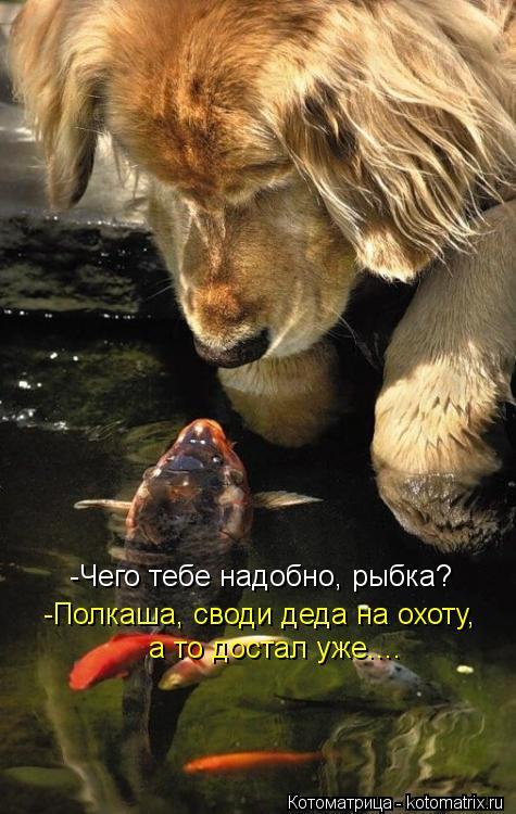 Котоматрица: -Чего тебе надобно, рыбка? -Полкаша, своди деда на охоту, а то достал уже....
