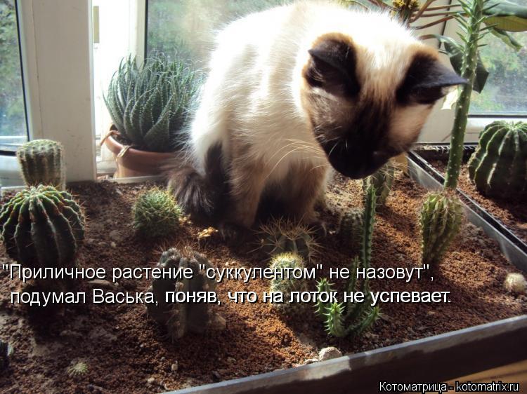 """Котоматрица: """"Приличное растение """"суккулентом"""" не назовут"""", подумал Васька,  поняв, что на лоток не успевает. поняв, что на лоток не успевает."""