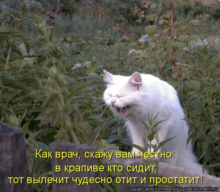 Котоматрица: Как врач, скажу вам честно: в крапиве кто сидит, тот вылечит чудесно отит и простатит!