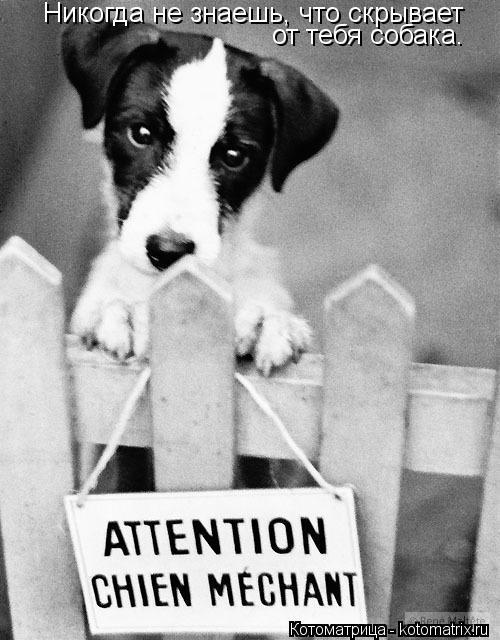 Котоматрица: Никогда не знаешь, что скрывает от тебя собака.