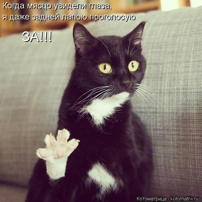 Котоматрица: Когда мясцо увидели глаза, я даже задней лапою проголосую ЗА!!!