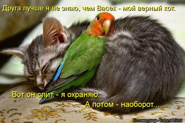 Котоматрица: Друга лучше я не знаю, чем Васек - мой верный кот. Вот он спит - я охраняю. А потом - наоборот...