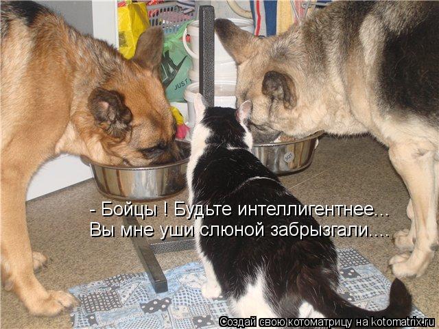 Котоматрица: - Бойцы ! Будьте интеллигентнее... Вы мне уши слюной забрызгали....