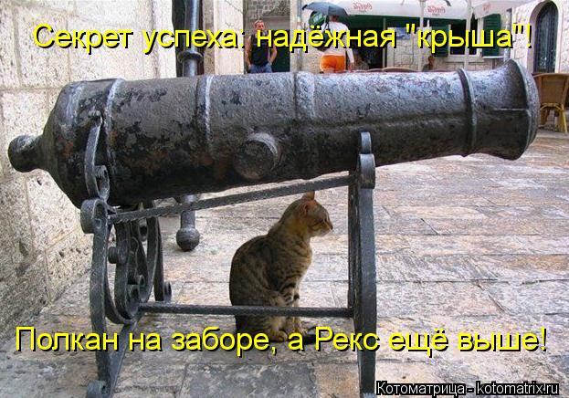 "Котоматрица: Секрет успеха: надёжная ""крыша""! Полкан на заборе, а Рекс ещё выше!"