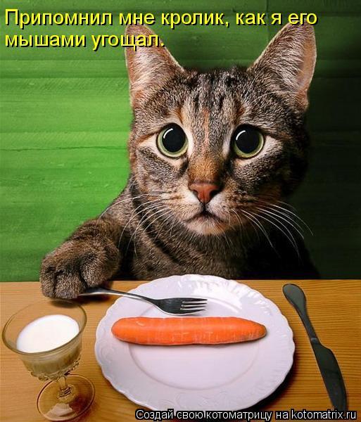 Котоматрица: Припомнил мне кролик, как я его мышами угощал.